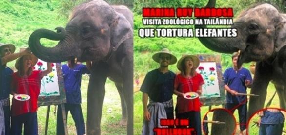Atriz Mariana Ruy Barbosa visita santuário de elefante e recebe inúmeras críticas