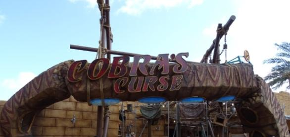 Cobra's Curse isn't for people who fear snakes. (Photo by Barb Nefer)