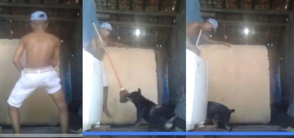 Cachorro ataca garoto que dança funk