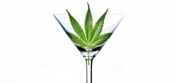 """Cannabis, la Consulta: """"La coltivazione per uso personale resta ... - improntaunika.it"""