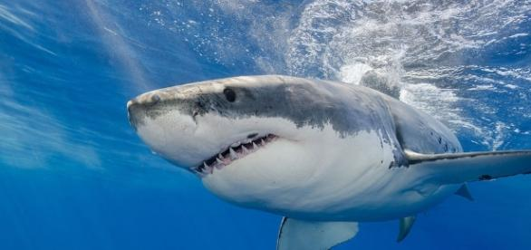 Everything we know about sharks might be nothing more than a misconception/Photo via livescience.com