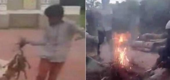 Cachorro é queimado em vídeo - Foto/Reprodução