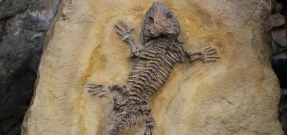 Pelos, plumas y escamas comparten el mismo ancestro