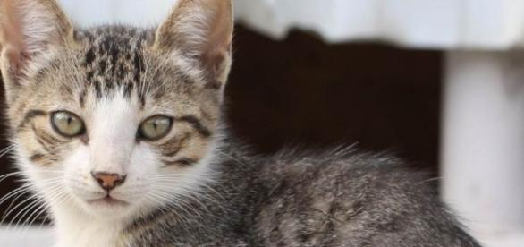 Gatos ganharão a chance de serem adotados (Foto: Jorge Andre/Rio 2016)
