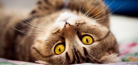 Gatos serão resgatados e colocados para adoção (Foto meramente ilustrativa)