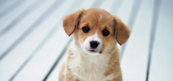 Clínica veterinária deve pagar mais de R$ 13 mil por morte de cachorro (Foto ilustrativa)