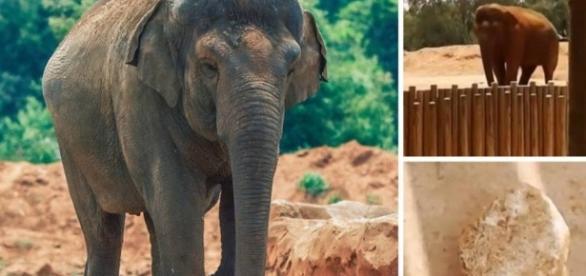 Elefante arremessa pedra e mata criança em zoo no Marrocos | VEJA.com - com.br