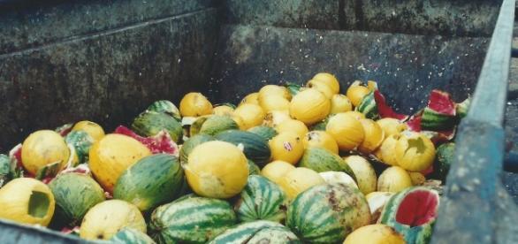A tecnologia pesquisada, o esforço do homem do campo, a água utilizada na produção, tudo isso vai junto com o alimento desperdiçado