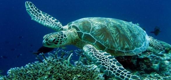 Lucky, a tartaruga marinha receberá tratamento na Grécia