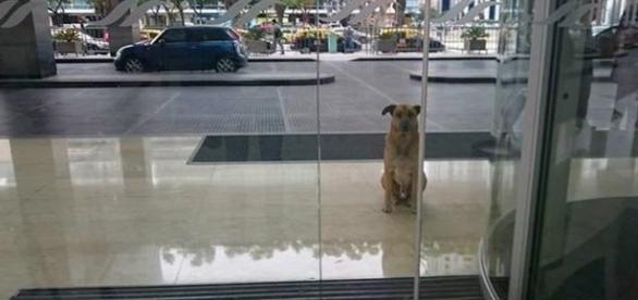 Cãozinho que esperava aeromoça