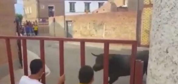 Un taur furios a rănit o fetiță de 7 ani din România rezidentă în Spania