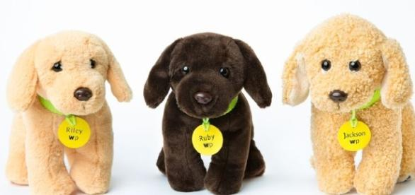 Woofpup gives users a chance to see their dog become a plush toy! / Photo via Brandon Palmer, Woofpup. Used with permission.