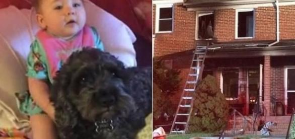 Imagens do cão herói que teria salvo menina durante incêndio