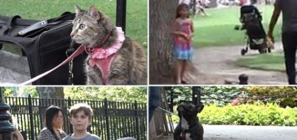 Un baiat, o fată, un câine și o pisică abandonați în parc. Cine va fi salvat primul?