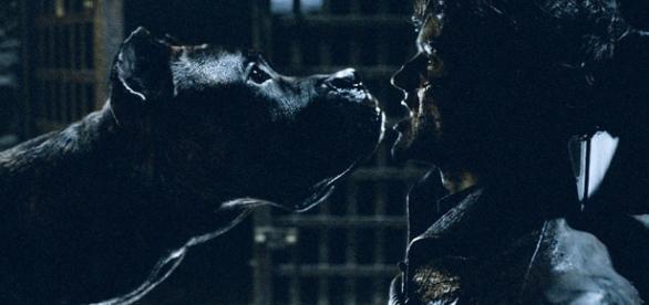Iwan Rheon passou maus bocados com os cães, durante as gravações de Game of Thrones