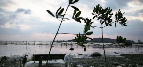 Contaminacion generalizada en Rio