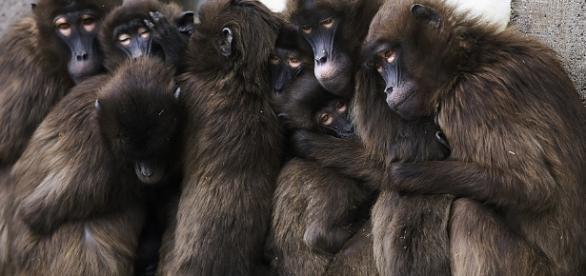 La teoría de los 8 monos - Taringa! - taringa.net