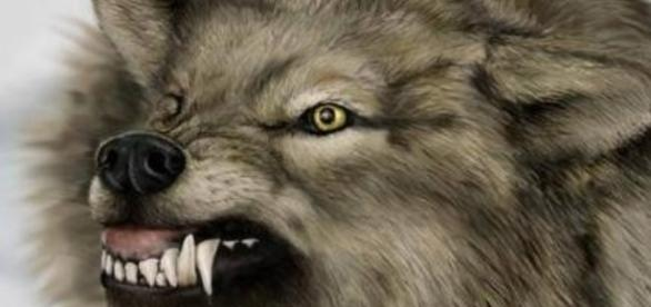 Angry Wolf..........................................