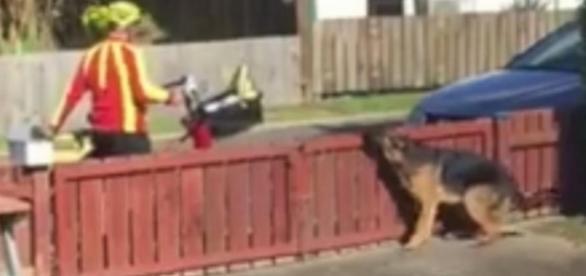 O dono filma escondido da janela, o que o carteiro faz com seu cão ... - resumodamoda.com