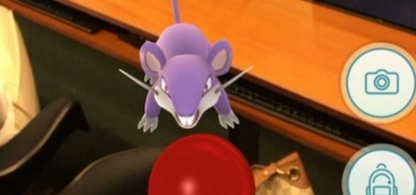Pokémon roedor é capturado justamente na Câmara