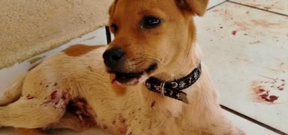Cão expulso com chutes teve dentes empurrados para dentro da gengiva