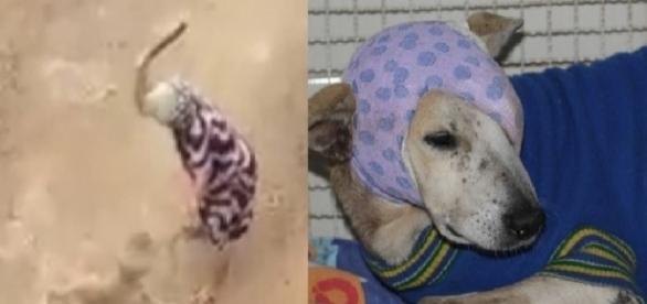 Cãozinho pode perder olho (Reprodução/Internet)