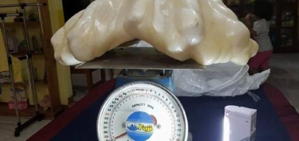 Em imagens a pérola encontrada por pescador.