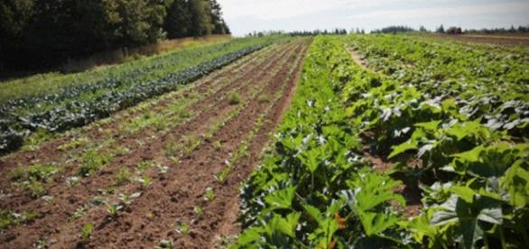 Agricultura integral, la solución salomonica
