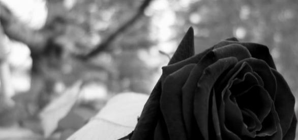 El hombre de la rosa negra – Los hijos de Niche - wordpress.com