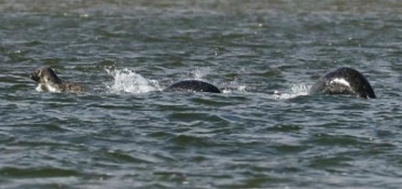 Ian Bremner alega ter registrado uma imagem do Monstro do Lago Ness (Crédito: YouTube/MailOnline)