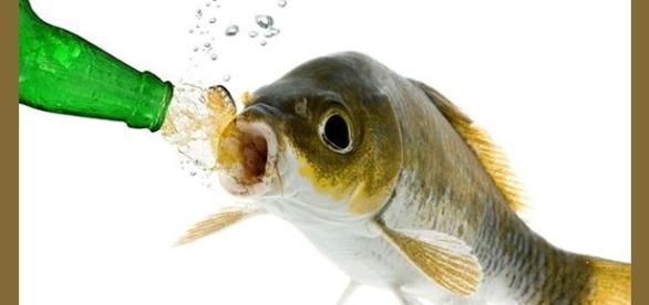 Los peces marinos beben agua continuamente
