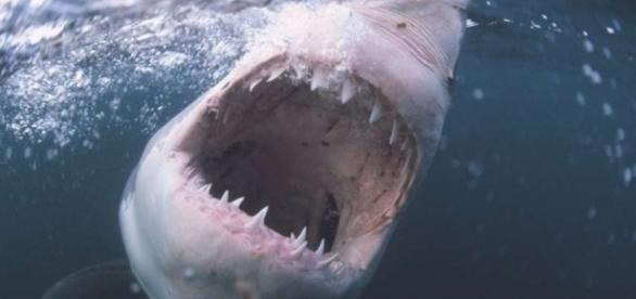 Three Shark Attacks On One Florida Beach Within Hours Photo Blasting News Library
