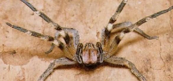 A casa de uma família foi invadida por aranhas.