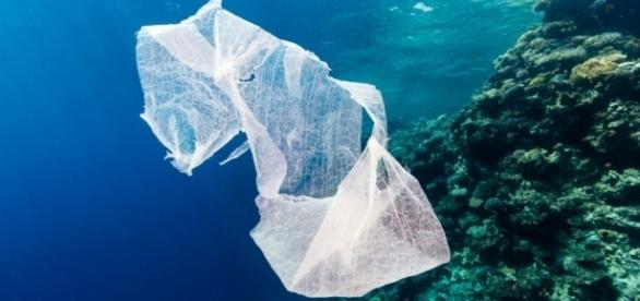 O plasă de plastic plutește în derivă prin ocean