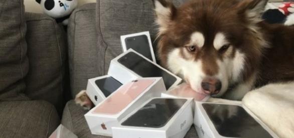 Coco foi presentado com oito iPhones 7