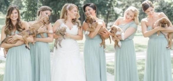 Sarah e as madrinhas do seu casamento com os filhotes (Foto: Caroline Logan Photography)