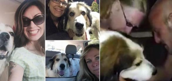 """El loco viaje de Apollo, el perro que recorrió 1.800 kilómetros """"a ... - com.ar"""