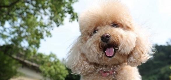 As 10 raças de cachorros mais inteligentes do mundo