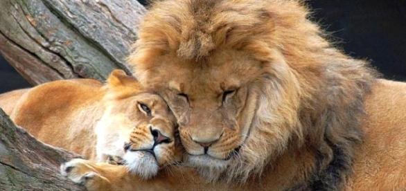 El león | periodicoazahar - juntadeandalucia.es