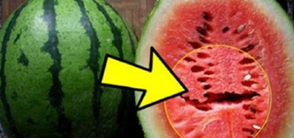 Se voce encontrar uma melancia assim, descarte imediatamente