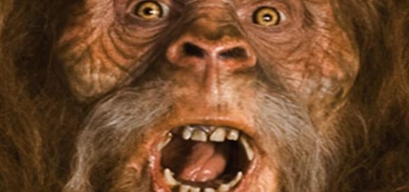 Funcionário acredita que Pé Grande viva no parque (Imagem ilustrativa/ Google Imagens)
