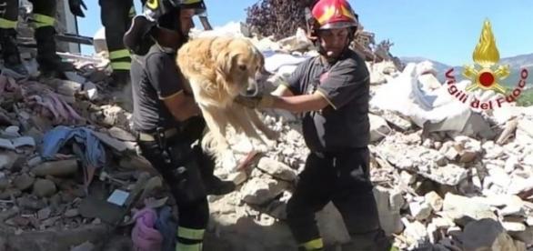 Romeo foi resgatado nove dias após o terremoto (Foto: Vigili del Fuoco/AFP)