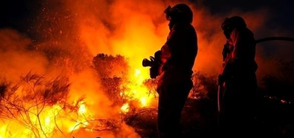 Mais de 600 operacionais auxiliados por 200 veículos e 9 meios aéreos no combate às chamas