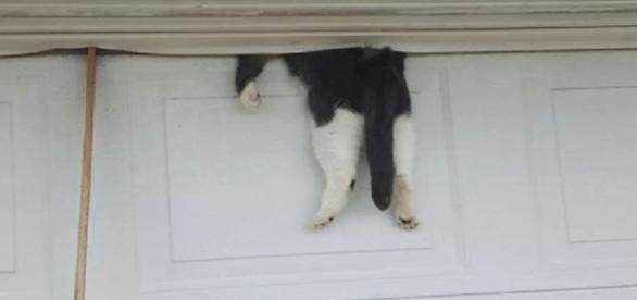 Gata é resgatada após ficar presa em garagem