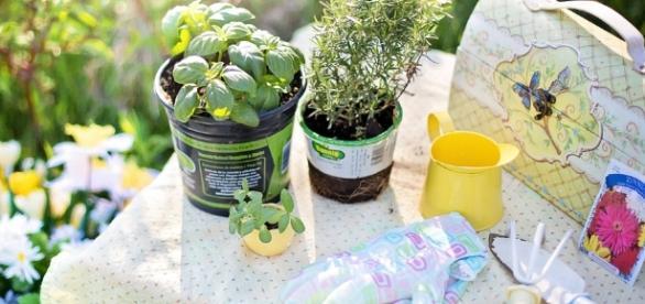Temperos e outras plantas comestíveis podem ser cultivadas em casa