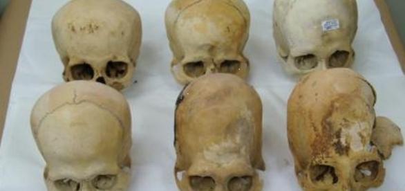 Cráneos de Paracas. Foto del Ministerio de Cultura de Perú