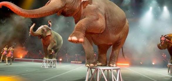 El Blog de Jaime Said: Triste adiós al circo - blogspot.com