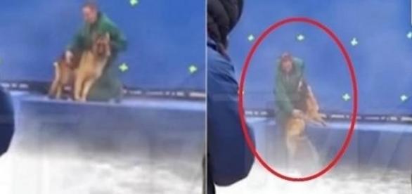 O cão foi forçado a cair na piscina agitada, mesmo estando apavorado