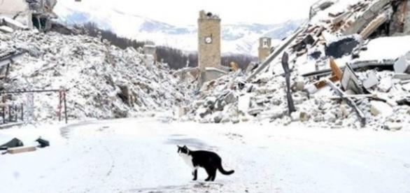 Terremoto, lo scandalo dei soldi inutilizzati | Lineadiretta24