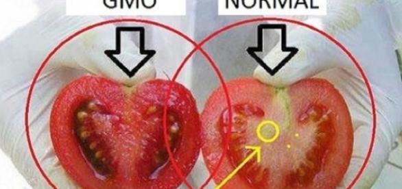 Você sabe como identificar um alimento transgênico?